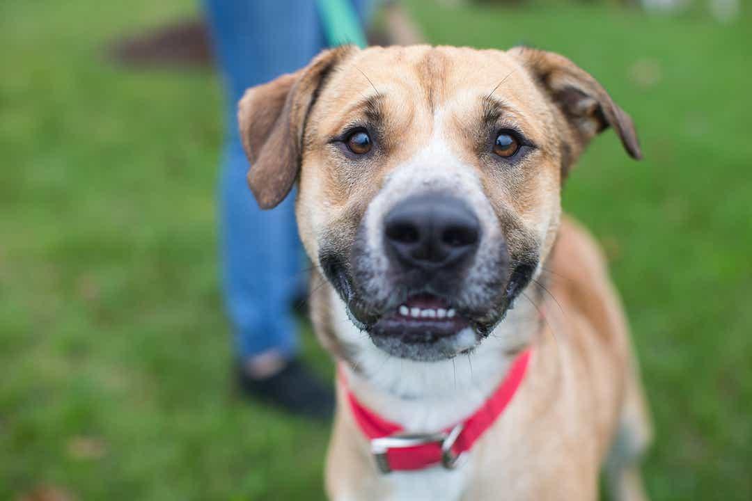 BISSELL Pet Foundation® und Dierenbescherming