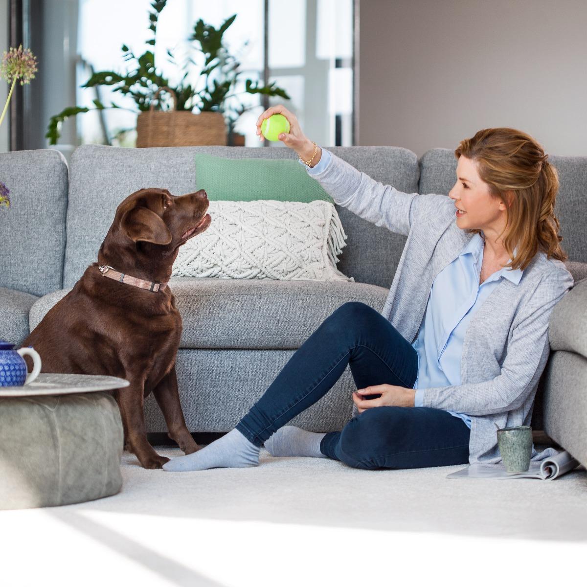 spotclean pet lifestyle